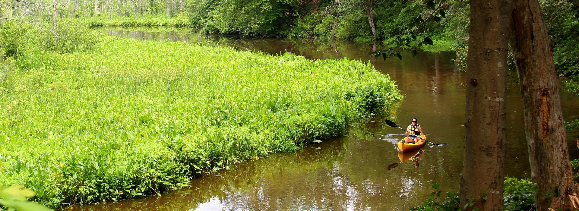 Explore the creek in a kayak.